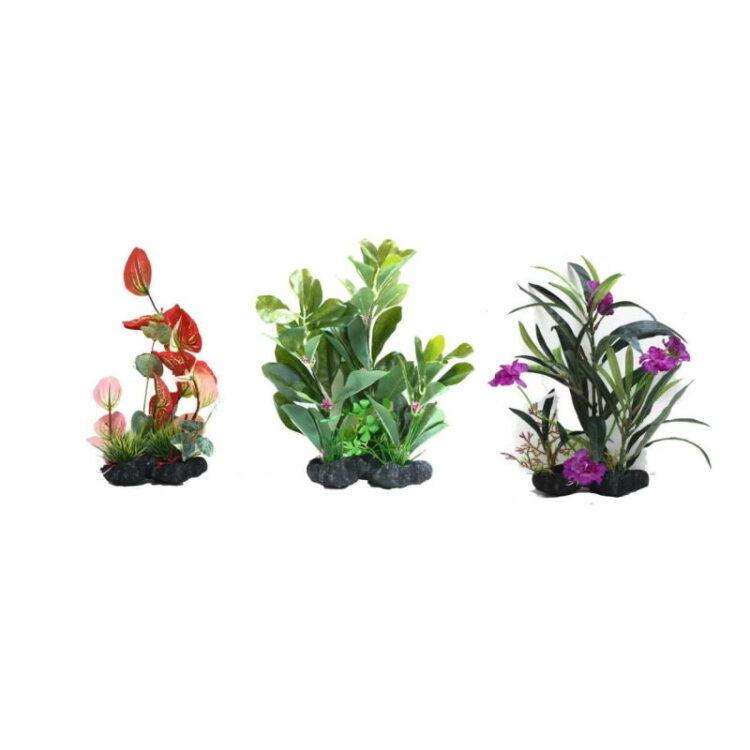 AMAZING PLANT SERIES B 25-30 cm