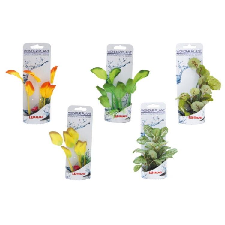 WONDER PLANT SERIES A 12-13 cm