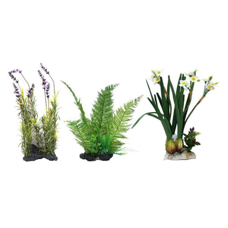 AMAZING PLANT SERIES 30-35 cm