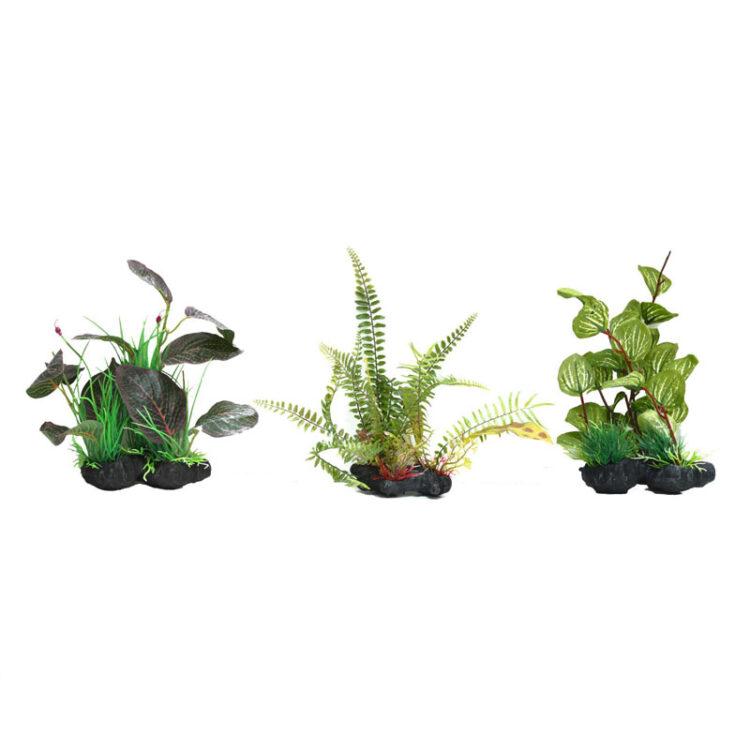 AMAZING PLANT SERIES A 25-30 cm