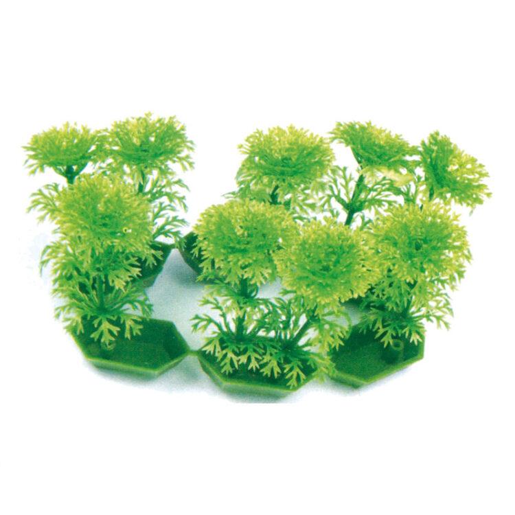PLANT CLASSIC 6 POTS CABOMBA