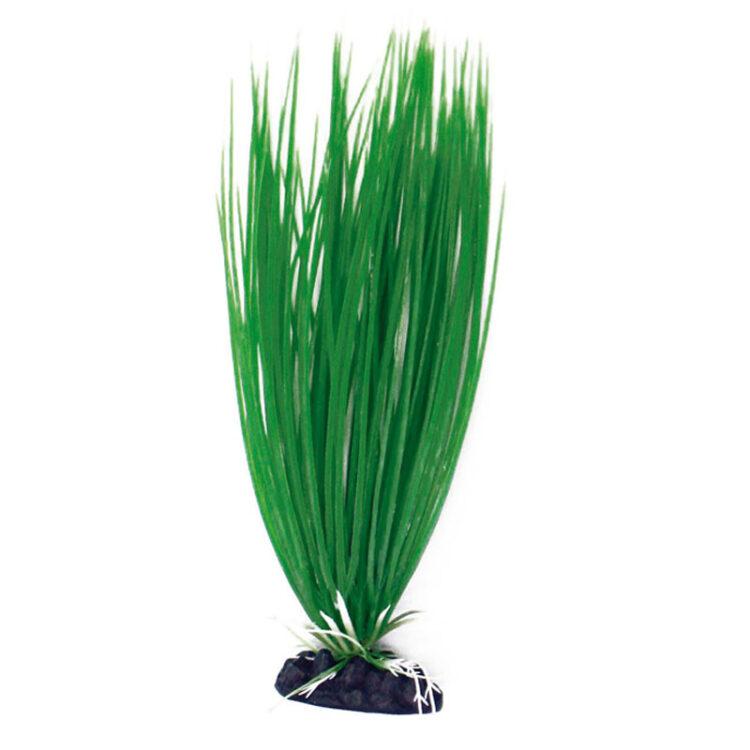 PLANT CLASSIC ACORUS LG
